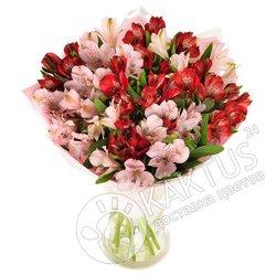 Розовые и красные альстромерии.