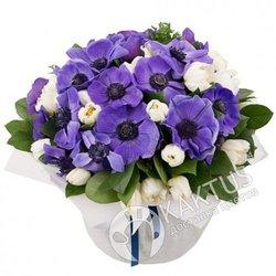 Фиолетовые анемоны с белыми тюльпанами.