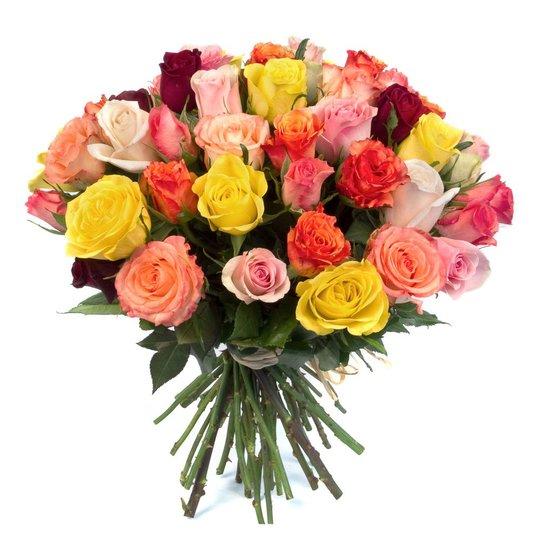 51 кенийская роза микс в интернет магазине kaktus-24.ru