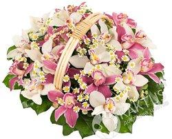 Корзина розовых и белых орхидей.